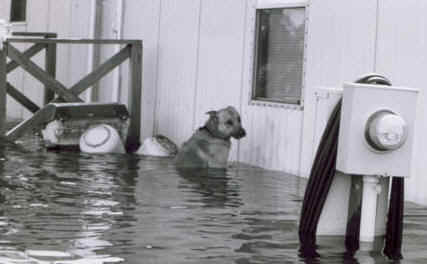 Dog_In_FLOOD_BW.jpg (12189 bytes)